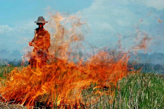 A Worker Burning Sugar Cane