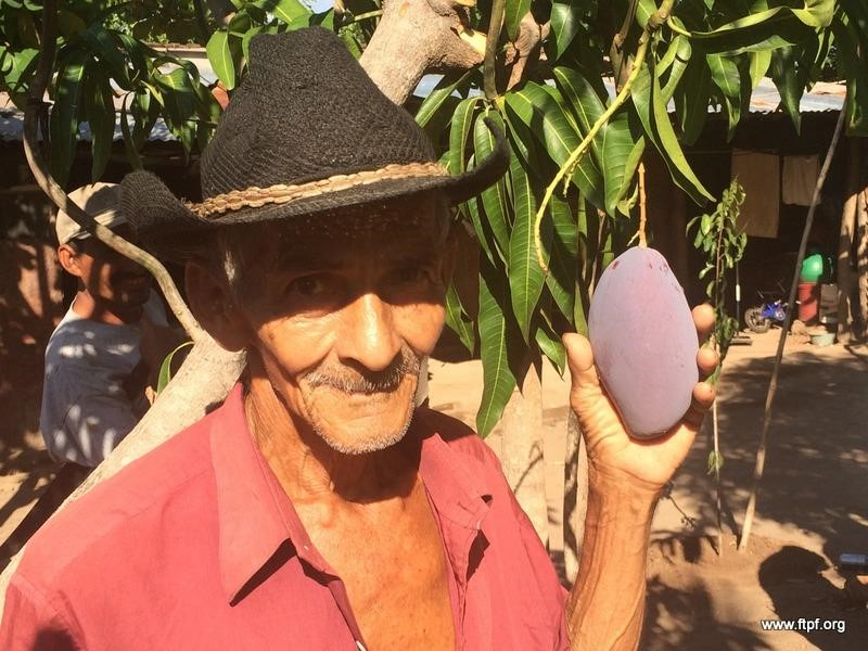 Man with Mango