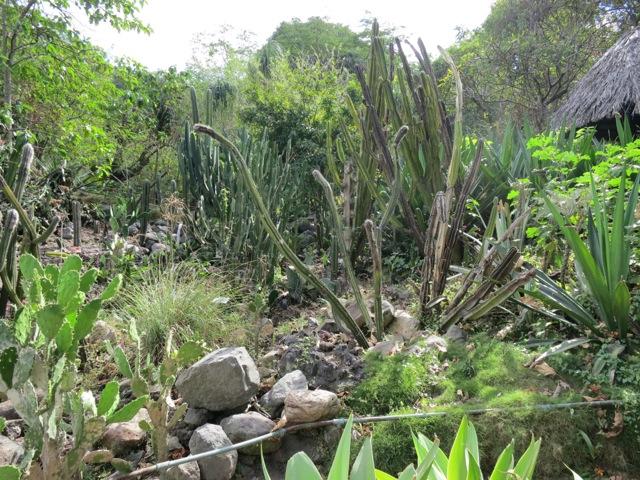 Caci Garden